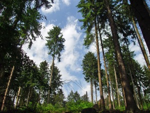 Wald vor lauter Bäumen...