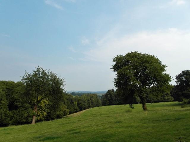 Grüne Wiesen & blauer Himmel