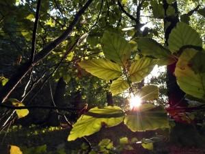 Ab und zu blinzelt sie neugierig durch die Blätter
