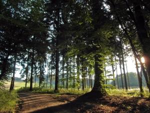 Der Wald öffnet sich
