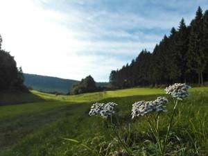 Ein Wiesenweg führt zum ersten Trockenmaar