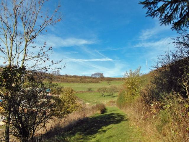 Graswege führen um Volkesfeld