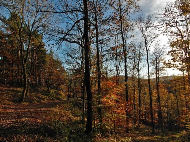 letzte Waldabschnitt