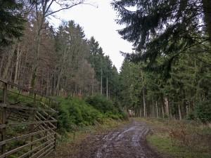 Waldweg in Richtung Köhlerhütte