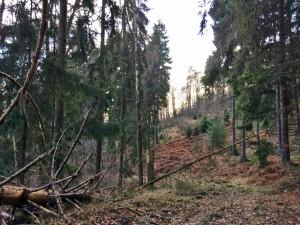 Naturbelassen und Einsam