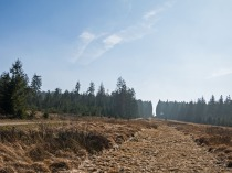 Den Forstweg kann man auch über die Piste ausweichen.