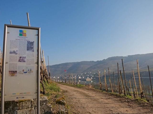 Weinbau in St. Aldegund