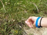 bennico_armband