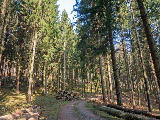 Forstweg durch den Wald