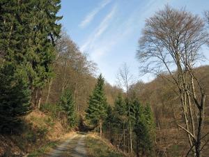 Waldabschnitt