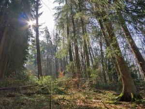 Bezaubernder Wald