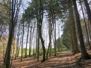 Aus dem Wald heraus