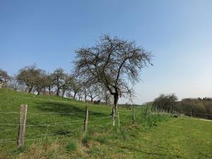 Wiesenweg zwischen den Weiden