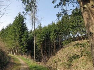 Waldabschnitt mit Sonne