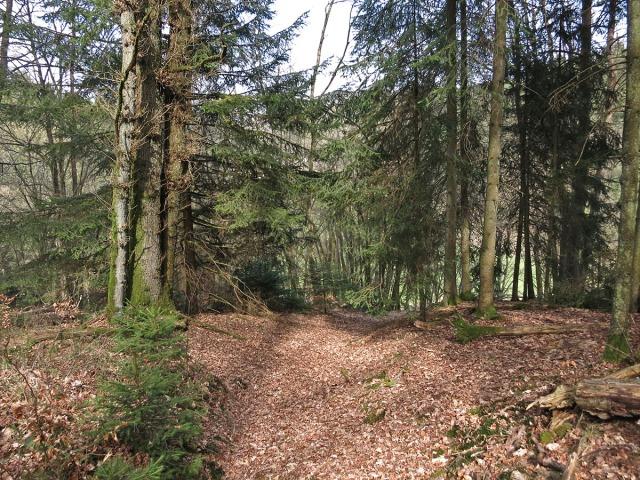 Pfad ins Holperbachtal