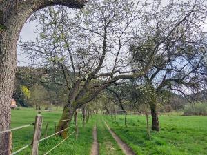 Wiesenwege zwischen den Weiden