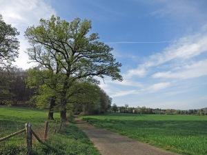 Auf dem Rheinhöhenweg