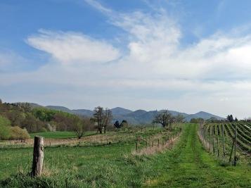Blick auf das Siebengebirge