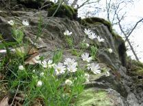 Sogar zwischen den Felsen wachsen Blümchen