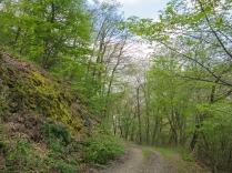 Der Waldweg Richtung Steg