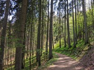 Forstwege