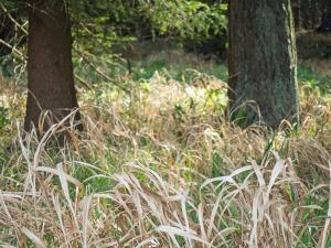 Gras zwischen den Bäumen