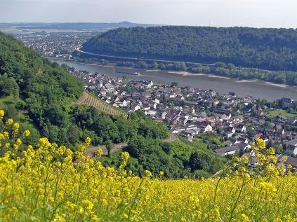 Rheinsteig oberhalb von Leutesdorf - Juni 2011
