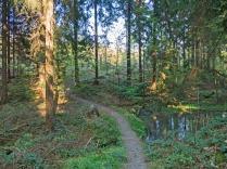 wieder in den Wald
