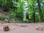 sandiger Waldboden