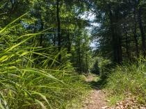 Pfade durch den Wald