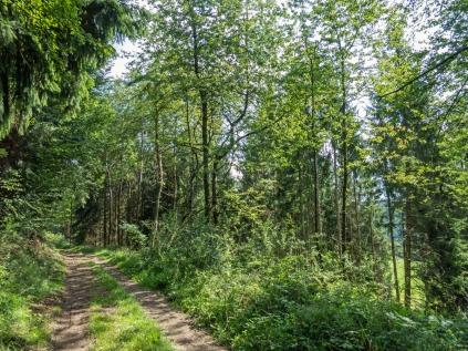 Ein kurzes Stück durch den Wald...