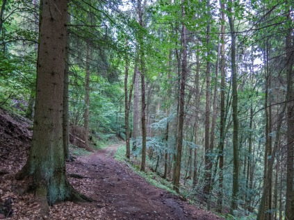 Der Wald hat mich wieder....