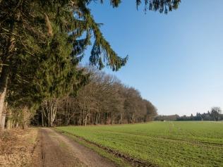 Die Rotbuche und der Feldweg