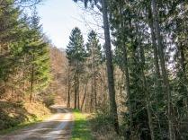 ... wechselt mit Waldabschnitten